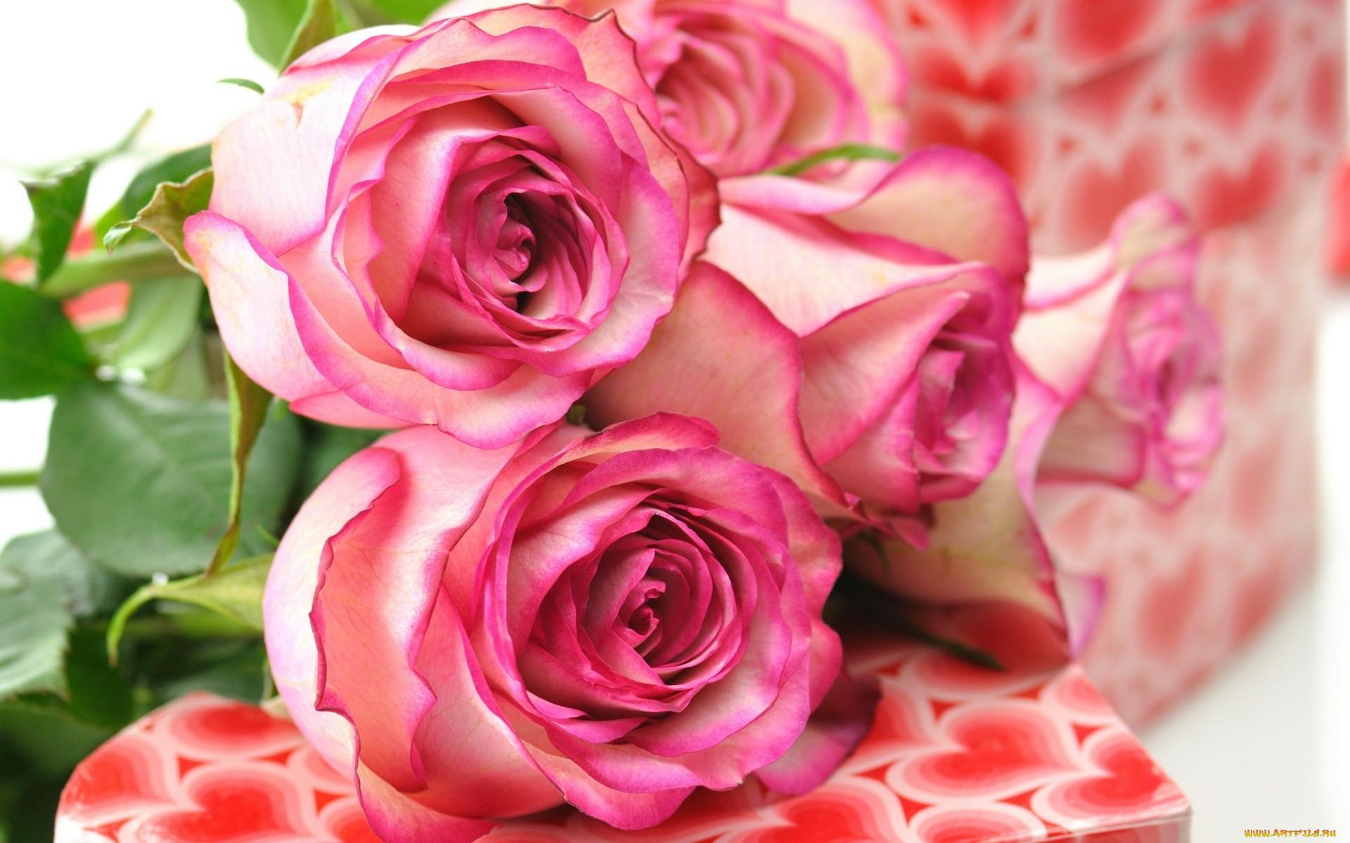 картинки на рабочий стол цветы красивые розы кухня это распространенный